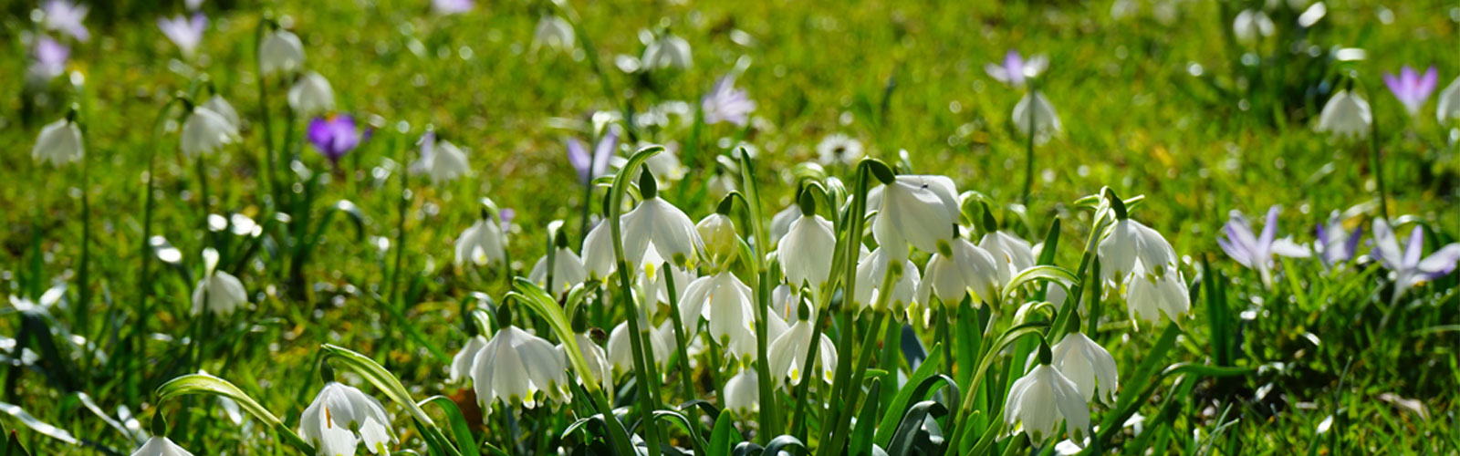 Der Frühling ist da - Ostergeschenk