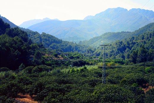 landscape electricity
